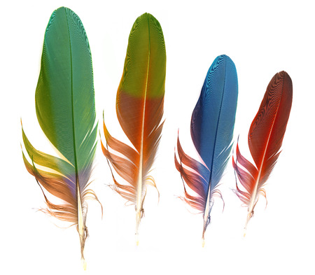 bird feathers: feathers on white background