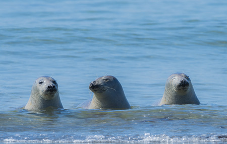 helgoland: seals on a beach - Helgoland, Germany Stock Photo