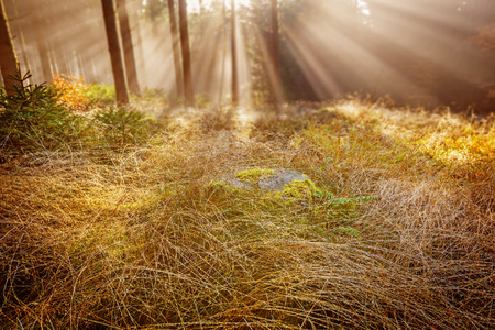 dew drop: dewy grass in the morning forest Stock Photo