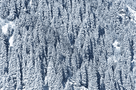 snow covered forest: snow covered forest - textured winter background