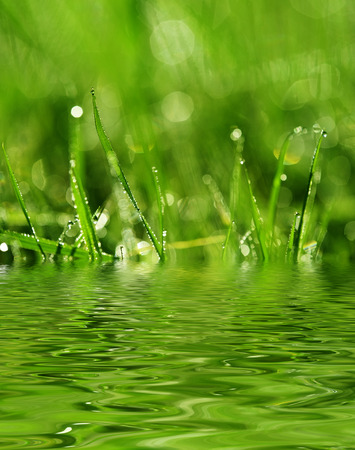 dew drop: dewy meadow grass - background with empty space for text