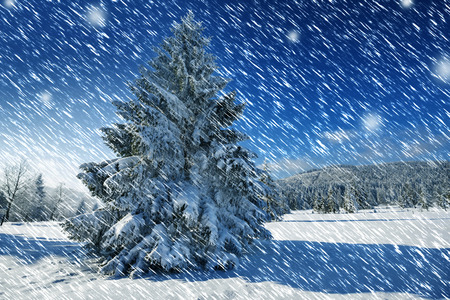covered in snow: winter landscape with big snow covered spruce tree Stock Photo