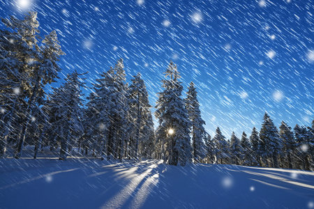 snow covered forest: winter sunset and snow covered forest