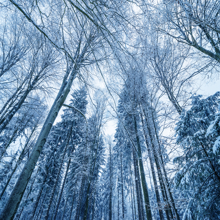 flurry: winter forest