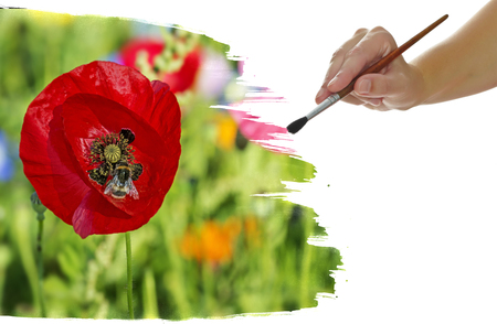 fields of flowers: hand paint picture with red poppies