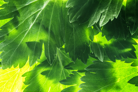 green leafs: green leafs in the detail