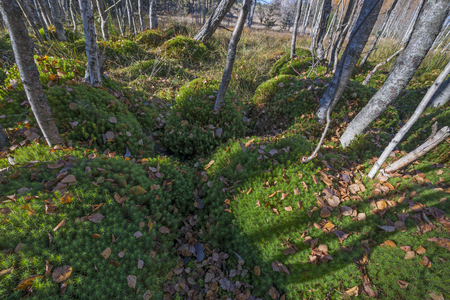 bog: moss in peat bog wood - Sumava, Czech republic Stock Photo