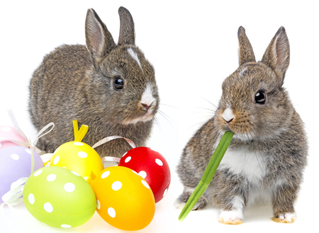 easter bunny: little rabbit and easter eggs Stock Photo