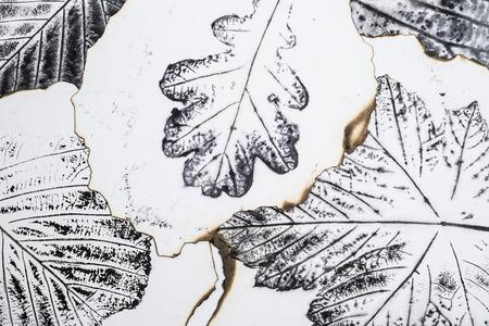 macro leaf: artistic image - imprints of leaves - Graphics - monotype Stock Photo