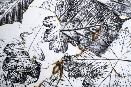 macro leaf: artistic image - imprints of leaves - Graphics - monotype Stock Photo