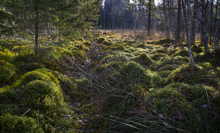 turba: turbera en el Parque Nacional de Sumava Europa Foto de archivo
