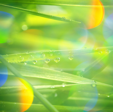 dew drop: green grass with water drops