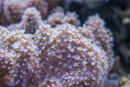 polyp: coral close up Stock Photo