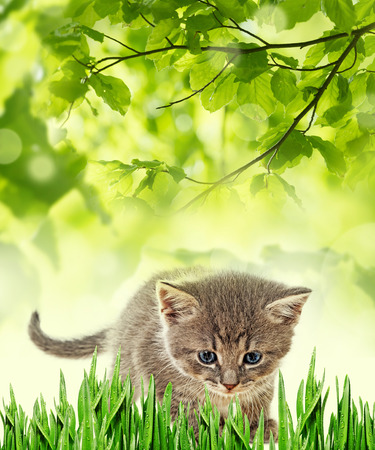 frisky: kitten Stock Photo