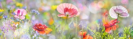 赤いポピーで夏の草原
