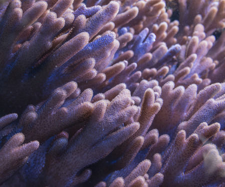 polyp corals: coral close up Stock Photo