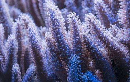 close up: coral close up Stock Photo
