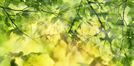 Frühlingswald - frische Blätter und Sonnenstrahlen