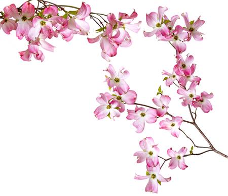 lentetak met bloemen Stockfoto