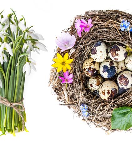 quail nest: a nest with quail eggs - easter still life
