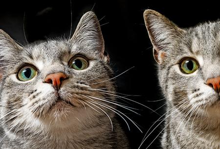 frisky: green cat eyes Stock Photo