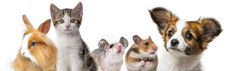 cute animals isolated over white Banque d'images