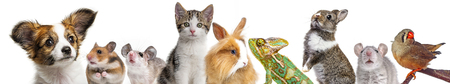 cute animals isolated over white Stock Photo