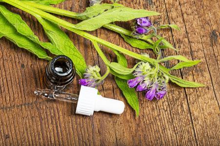 comfrey herb - Symphytum officinale Stock Photo