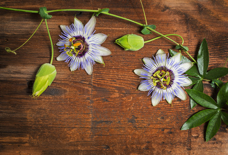 passiflora: Passiflora on a wooden background Stock Photo