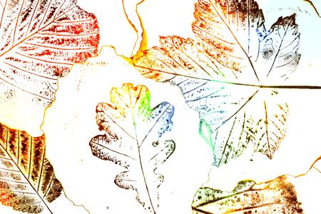 monotype: artistic image - imprints of leaves - Graphics - monotype Stock Photo