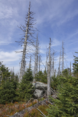 dead dry forest - bark beetle calamity on national park Sumava Stock Photo