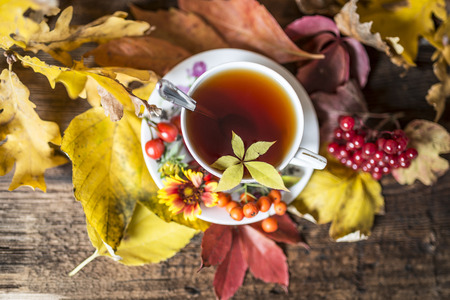 rust red: autumn still life with a cup of tea