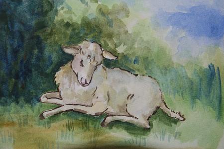 image lamb: cute lamb - wattercolor illustration
