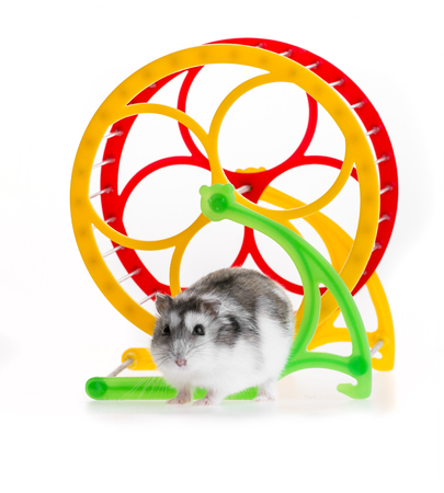 hamster and a wheel
