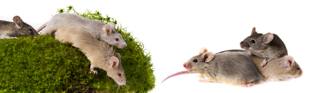 moos: mice on a green moos Stock Photo