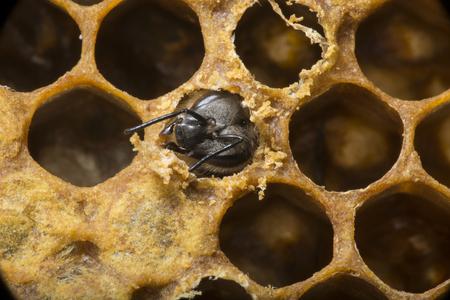 hatching new bee