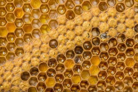 bee combs Stock Photo