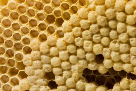 꿀벌 계란과 어린 꿀벌 - 꿀벌과 꿀벌 빗 스톡 콘텐츠
