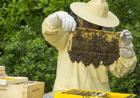 adds: Beekeeper works in a hive - adds frames Stock Photo