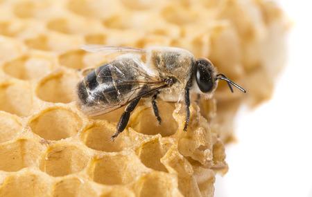bee drone Stock Photo