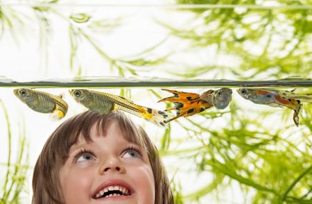 poecilia: little girl looking at Guppy, Barbados Millions, Million fish - (Poecilia reticulata)