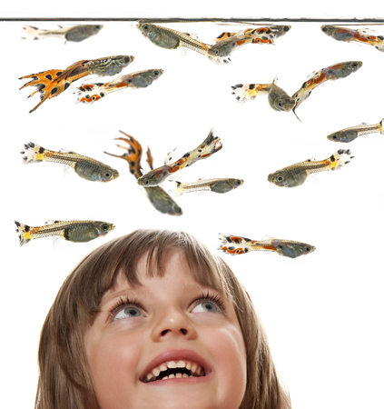 poecilia reticulata: little girl watching Guppy, Barbados Millions, Million fish - (Poecilia reticulata) Stock Photo