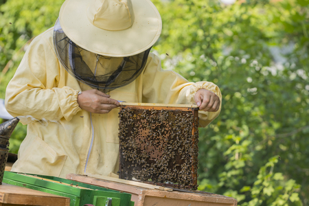 adds: Beekeeper works in a hive - adds frames, watching bees Stock Photo
