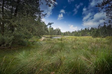 bogs: Peat bogs - National Nature Reserve - Cervene blato,Trebonsko, Crech republic, Europe