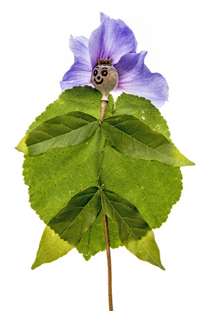 doll from poppy head and flowers - isolated on white
