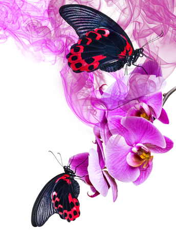 black and red tropical butterflies sitting on orchid Stock Photo