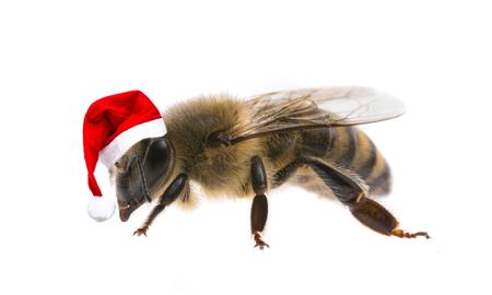 honingbij met kerst Pet geïsoleerd op een witte achtergrond Stockfoto