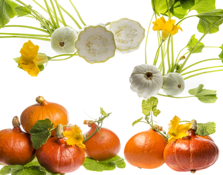 pumpkins and pattypans on a white background
