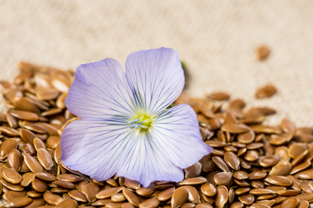 flax seed, linseed and flax flower on a linen textile Stock Photo