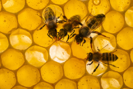 beeswax candle: bess on beecombs with honey in the detail - a macro photo Stock Photo
